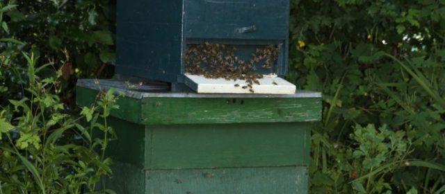 Bijen in de tuin…